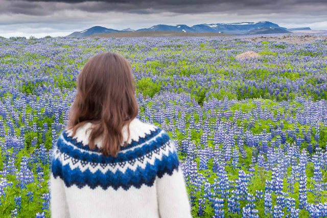 Frau mit Islandpullover im Lupinenfeld