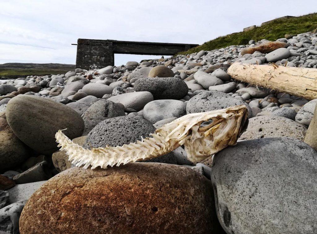 Fischskelett Halbinsel Langanes