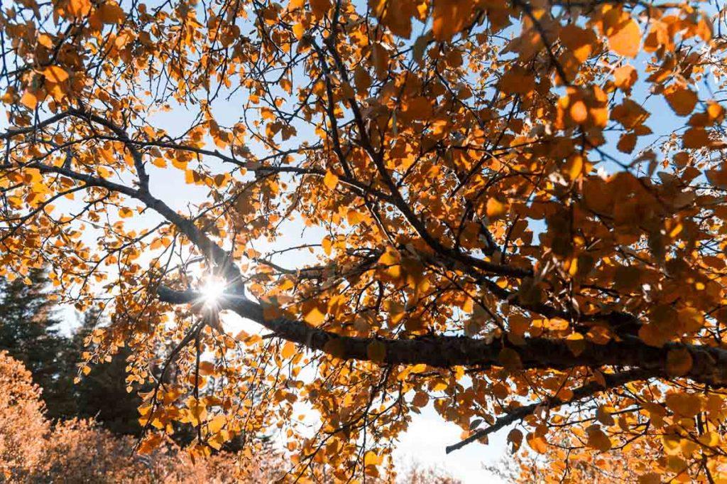 Herbst in Island - Farben, Licht und Pilzesuchen.