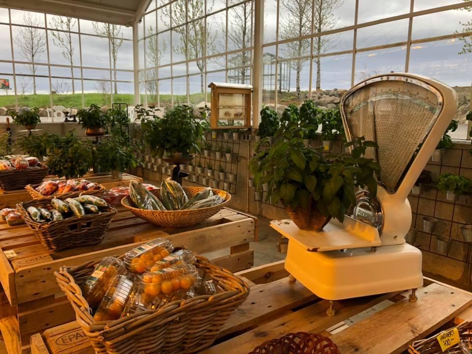 Essen, Island, Gemüse, Bauernmarkt, frisch, nachhaltig