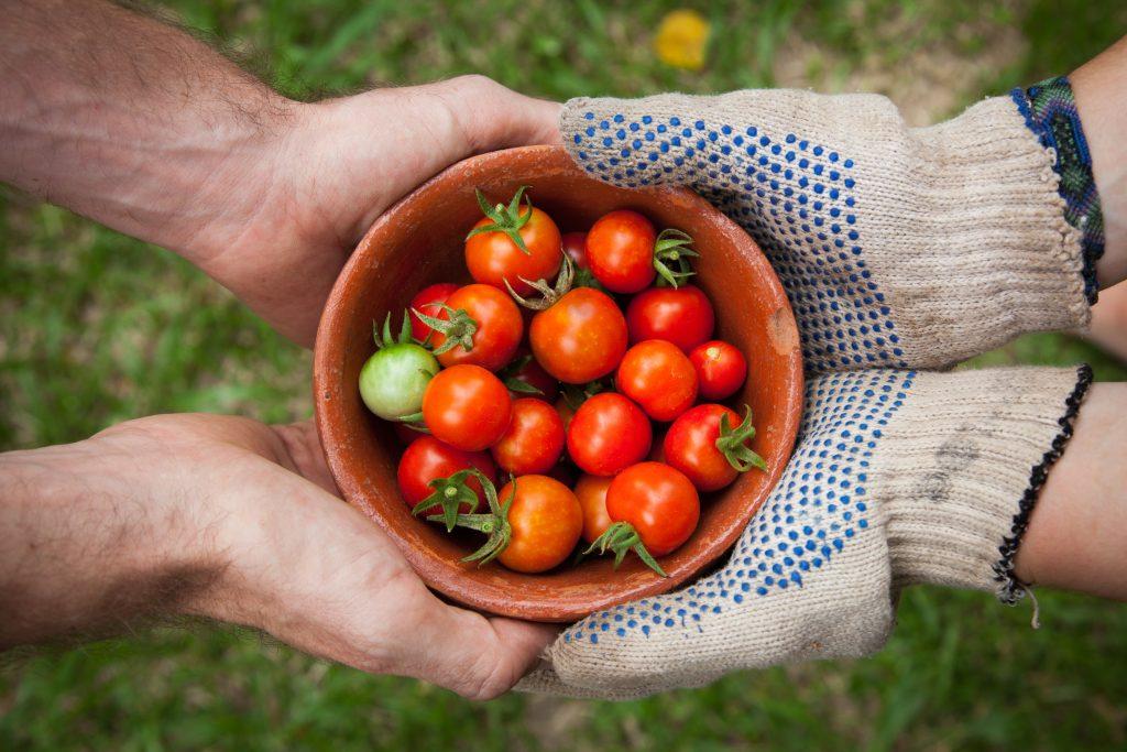 Tomaten, Esen, Island, biologisch, nachhaltig, Hof