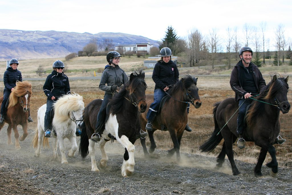 Reiter auf Island Pferden