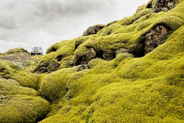 Moos, Jeep, Hochland, Island