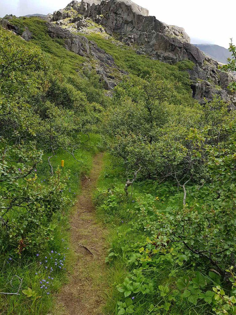 Ein Wanderweg am Hoffell in Südisland