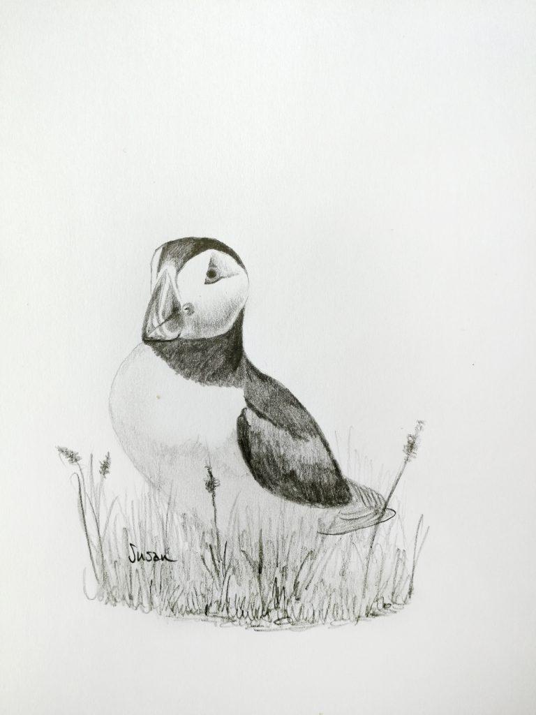 schwarz-weiße Bleistiftzeichnung eines Papageitaucher in Island